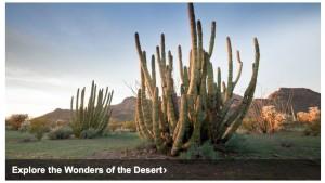 Organ Pipe Breakfast - Drive - Visit - Optional Camping @ Seis Restaurant | Tucson | Arizona | United States